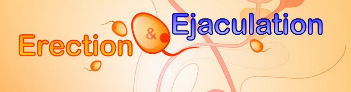 How Erections work & what triggers ejaculations? All you need to know